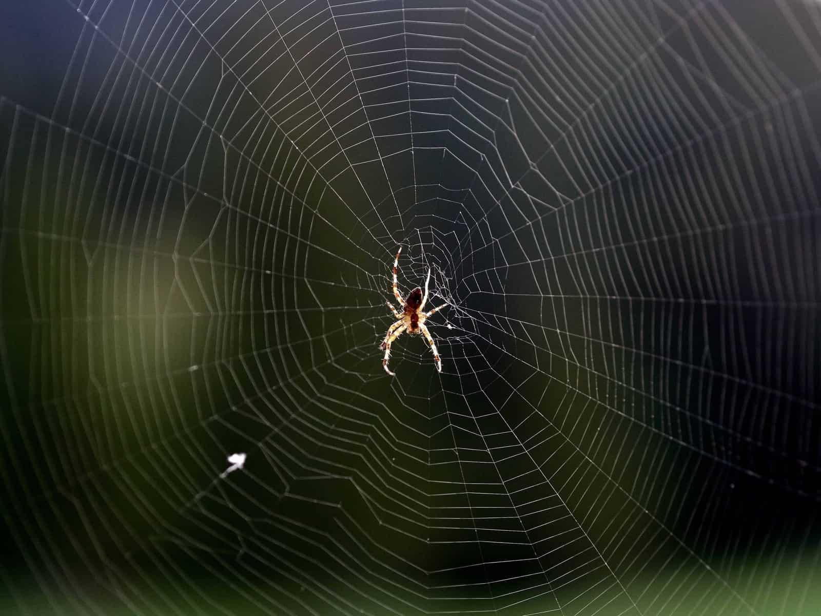 Remede De Grand Mere Contre Les Moucherons Dans La Maison eloigner les araignées de la maison avec des astuces naturelles