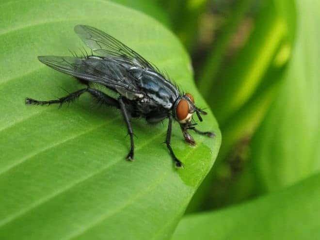 Nos solutions naturelles contre les mouches - Pourquoi les mouches piquent ...