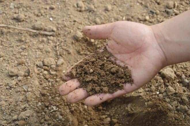 une main d'homme qui ramasse de la terre