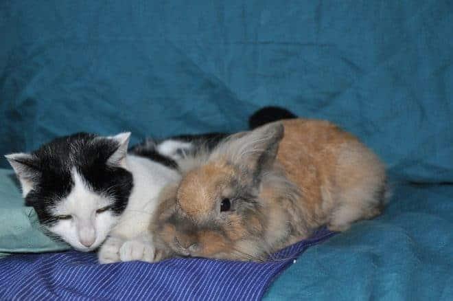 un chaton et un lapin sur un canapé