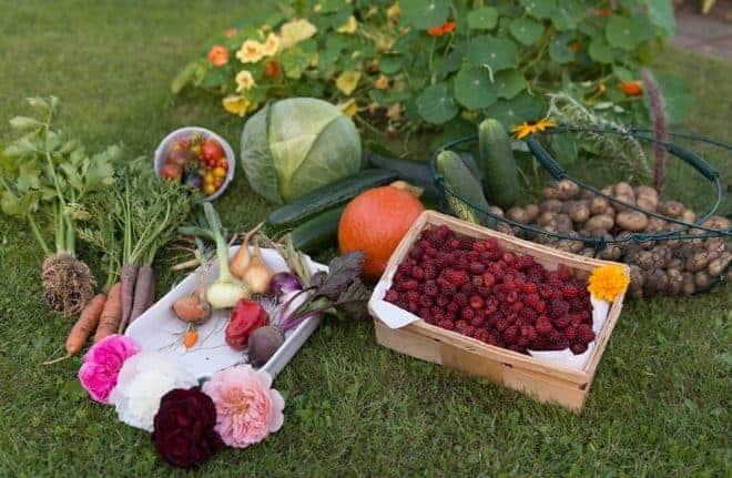des récoltes sans produits chimiques