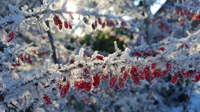 Protéger jardin en hiver