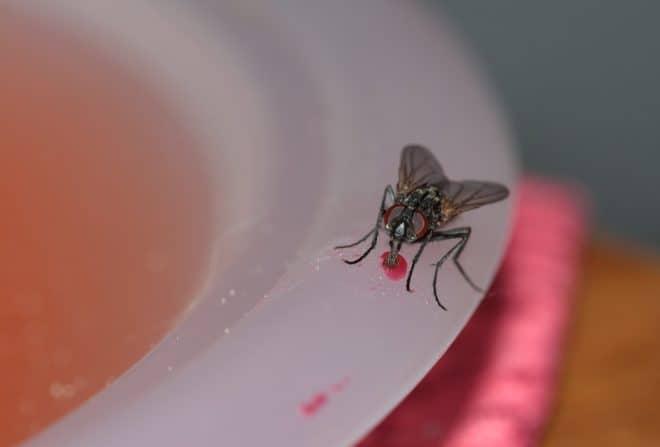 Une mouche sur une assiette