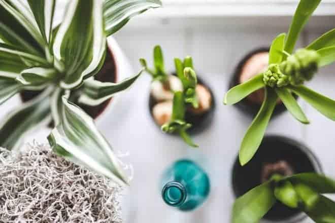 Plantes hydratées