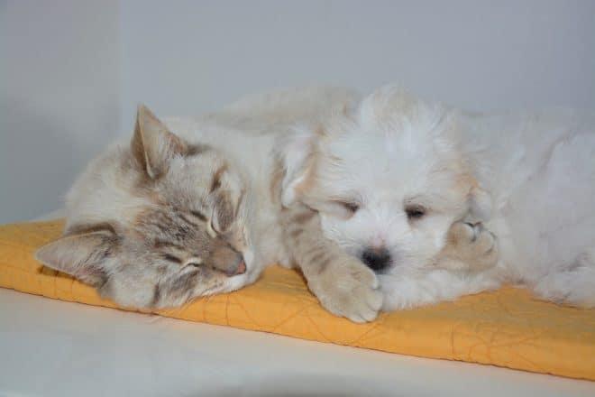 Chiens et chats en sieste