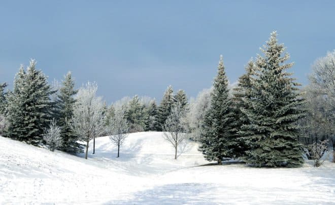 Des sapins dans un paysage de neige.