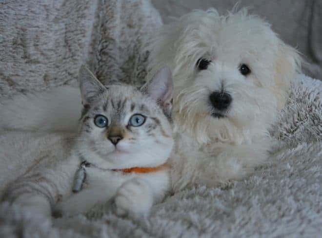 Chat et chien ensemble