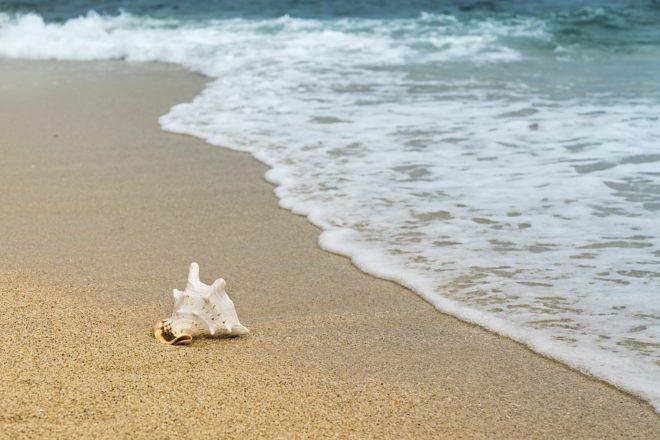 Coquillage à la plage