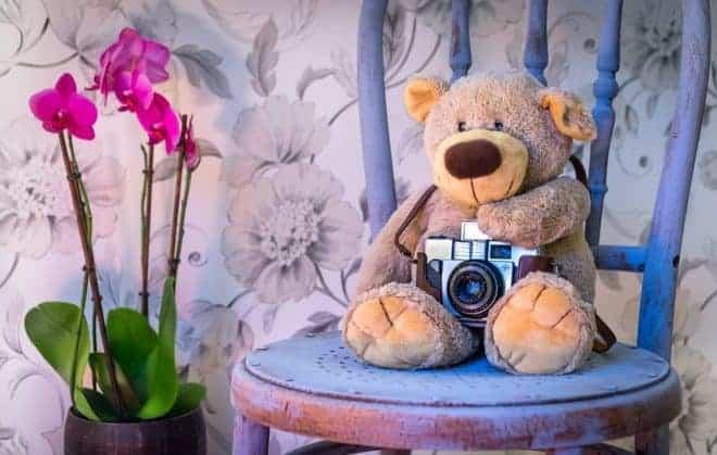 Ourson en peluche, appareil photo, fleur