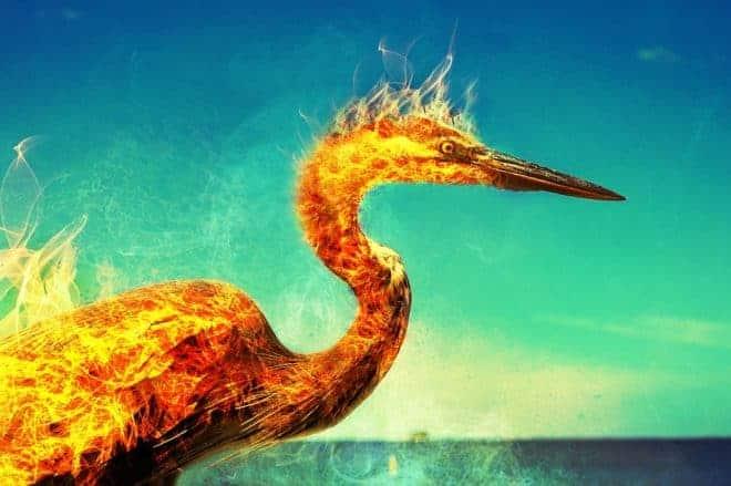 Phoenix en flamme