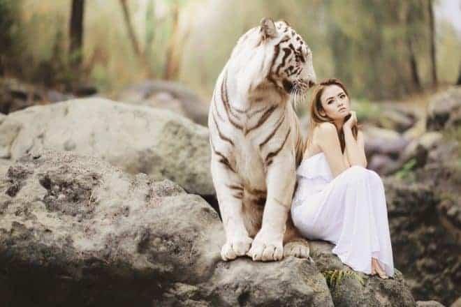 Tigre et jeune fille