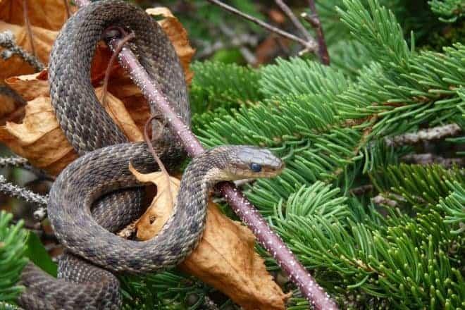 Serpent noir sur une branche