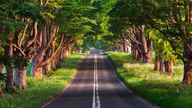 Route, arbre