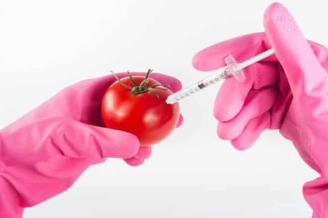 Impacts OGM