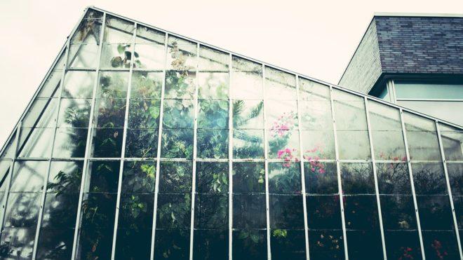 Serre, plantes