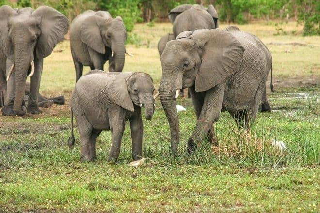 4 élephants
