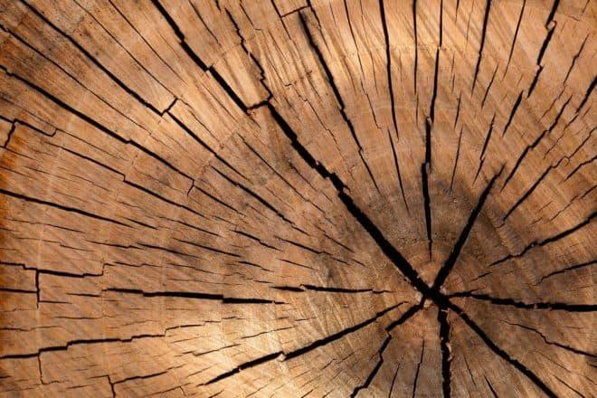 Un tronc d'arbre.