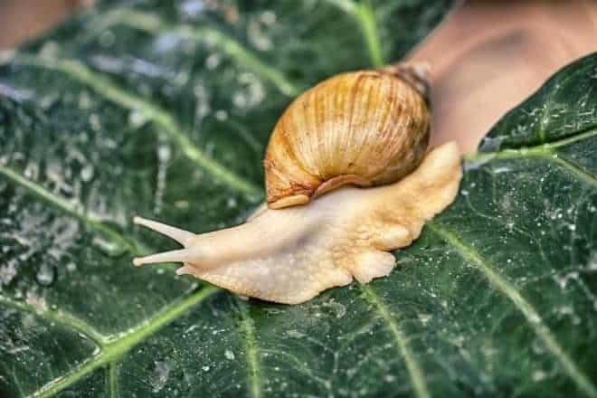 Limace, escargot